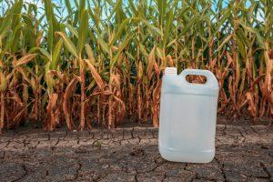 White plastic pesticide chemical jug in cornfield
